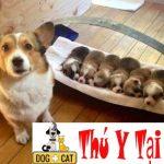 Chăm sóc chó, mèo khi mang thai