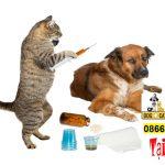 Lịch tẩy giun, tiêm phòng chó mèo đúng tại Việt Nam