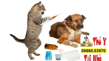 lịch tẩy giun tiêm phòng chó mèo đúng tại việt nam