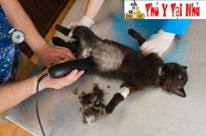 hình ảnh siêu âm một chú mèo