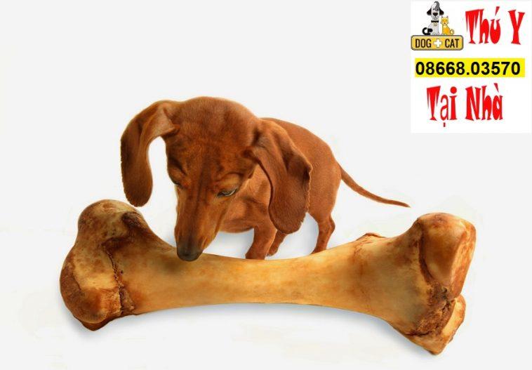 bệnh tụt canxi ở chó mèo khiến chó mèo ngất xỉu tụt lưỡi còi cọc co giật thậm chí tử vong