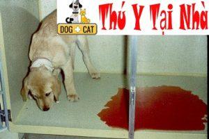 nhận biết chó bị mắc bệnh parvo