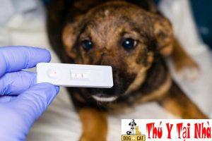 xét nghiệm là phương pháp chuẩn đoán bệnh parvo ở chó chính xác nhất
