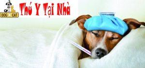 điều trị cho chó bằng phương pháp tây y