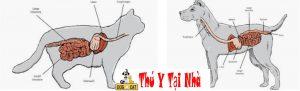 cấu tạo hệ tiêu hóa của chó và mèo