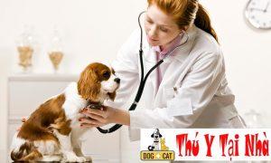 dịch vụ y tế của cơ sở phòng khám thú y chuyên nghiệp
