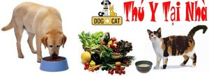 chế độ ăn uống hợp lý và tiêm phòng đầy đủ cho chó mèo