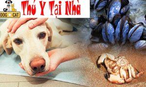 chó mèo bị ngộ độc thức ăn bị đánh bả