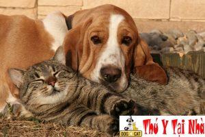 chó mèo bị sốt nôn co giật