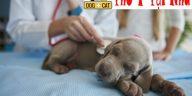 cách điều trị bệnh parvo cho chó như thế nào là đúng nhất