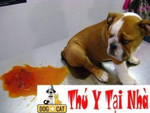 hình ảnh một chú chó bị rối loạn tiêu hóa tiêu chảy