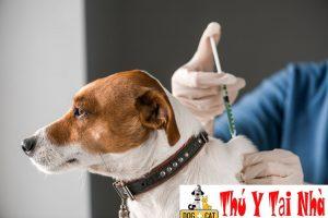 tiêm phòng bệnh cho chó được ưu tiên hàng đầu trong việc phòng ngừa bệnh Parvo