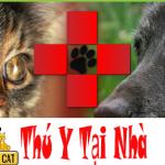 Cấp cứu chó mèo thú cưng 24/7/365 cả ngày lễ ngày tết