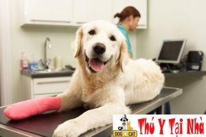 điều trị chó bị ốm mệt mỏi bỏ ăn