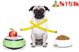 chăm sóc và hồi phục sức khỏe cho chó khi chó bị ốm