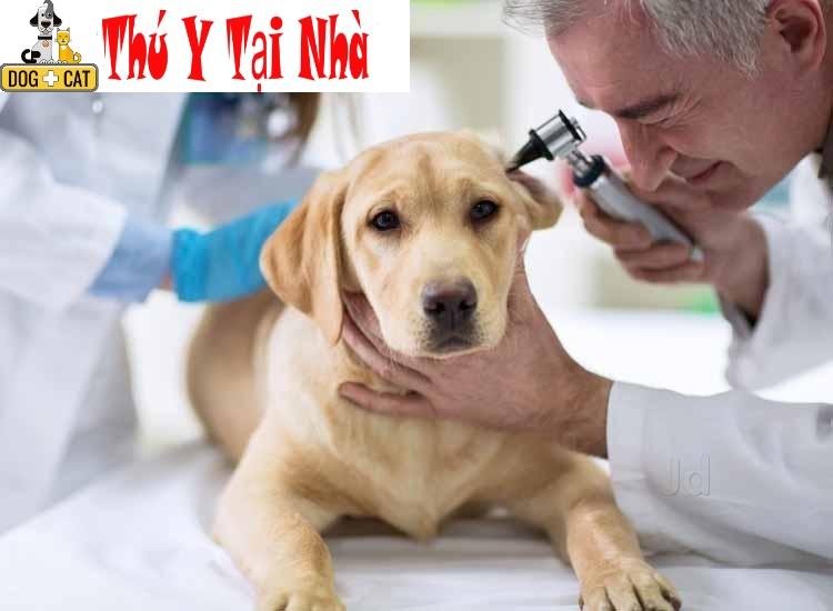 chó bị ốm bỏ ăn mệt mỏi
