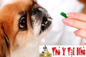 Những nguyên nhân khiến chó bị ốm