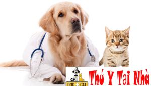 thường xuyên thăm khám theo dõi sức khỏe cún cưng tại các bệnh viện thú y uy tín