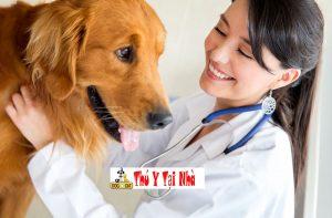 Chuẩn đoán bệnh lòi dom trĩ nội trĩ ngoại ở chó mèo