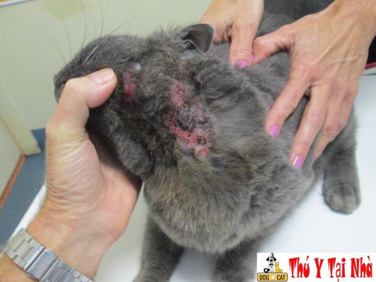 Chó Mèo bị nấm ghẻ viêm da rụng lông chữa như nào cho mau khỏi