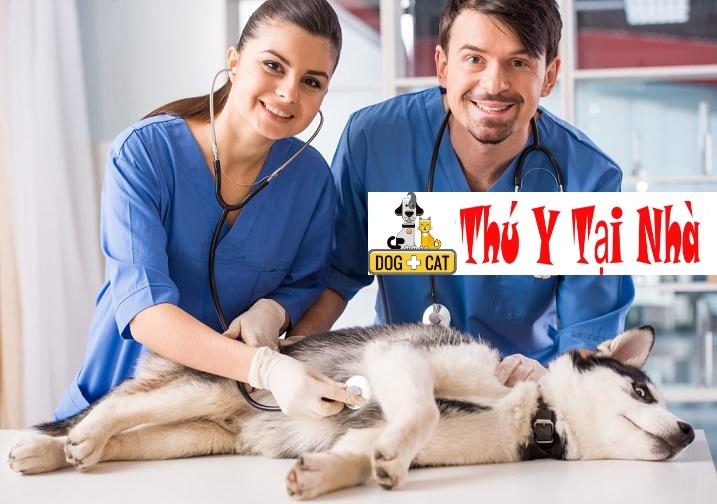 Bác sĩ thú y (bsty) tại nhà hà nội uy tín