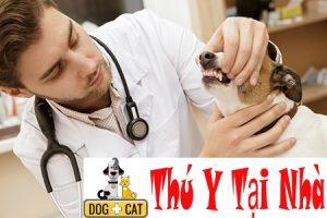 chó mèo sẽ được các bác sĩ thú y kiểm tra như thế nào