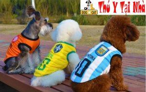 đặt tên chó mèo theo tên cầu thủ bóng đá