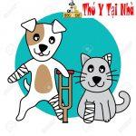 Chó mèo bị gãy chân , gãy xương, rạn xương