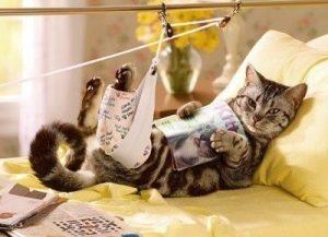 bó bột nẹp xương cho chó mèo bị gãy chân