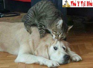 chó mèo cắn nhau gây vết thương sâu