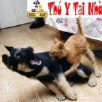 Chó mèo cắn nhau vết thương sâu bị hoại tử