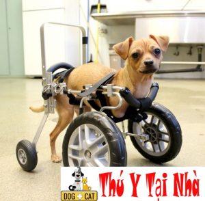chăm sóc chó mèo bị gãy chân gãy xương
