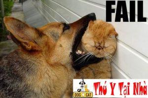 Nguyên nhân khiến chó mèo cắn nhau