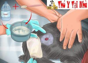 chăm sóc vết thương cho chó mèo khi bị cắn