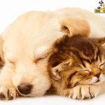 toàn tập cách đặt tên cho chó mèo thú cưng siêu hay và dễ thương