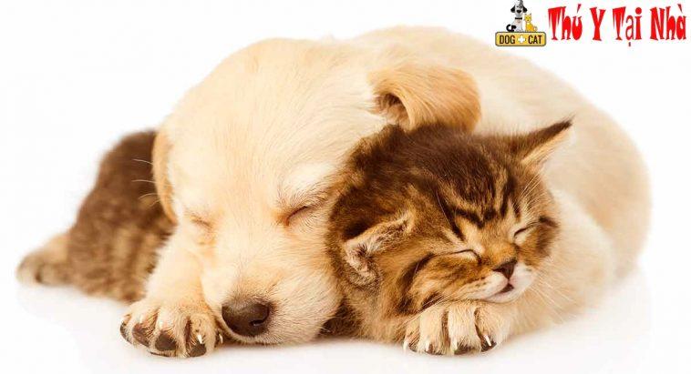 Cách đặt tên cho chó mèo hay và dễ thương nhất