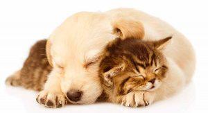 hạn chế việc chó mèo cắn nhau thay vào đó là yêu thương nhau
