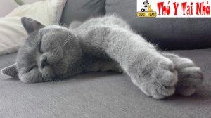 phòng bệnh giảm bạch cầu cho mèo như thế nào
