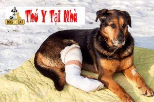 dấu hiệu chó mèo bị gãy chân gãy xương rạn xương