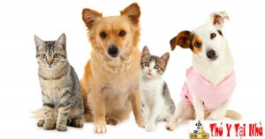 đặt tên các con vật theo các thương hiệu nổi tiếng