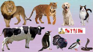 Đặt tên chó mèo theo tên các loại vật khác