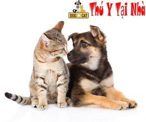 tiếp cận chó mèo một cách chậm rãi giúp chúng yêu thương nhau hơn