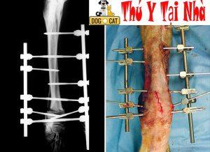 Đóng đinh nẹp xương cho chó mèo