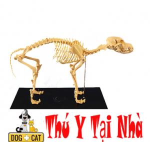 Cấu tạo xương mèo
