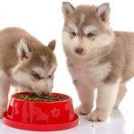 Top 5 loại thức ăn hạt phổ biến cho chó lớn & nhỏ