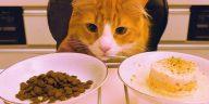 top 5 loại thức ăn hạt khô phổ biến dành cho mèo